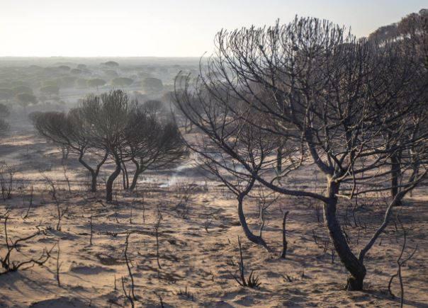 Doñana incendio